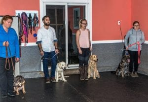 Dog training clinics